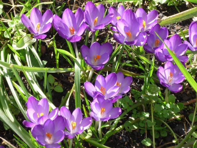 Le printemps arrive P1030125