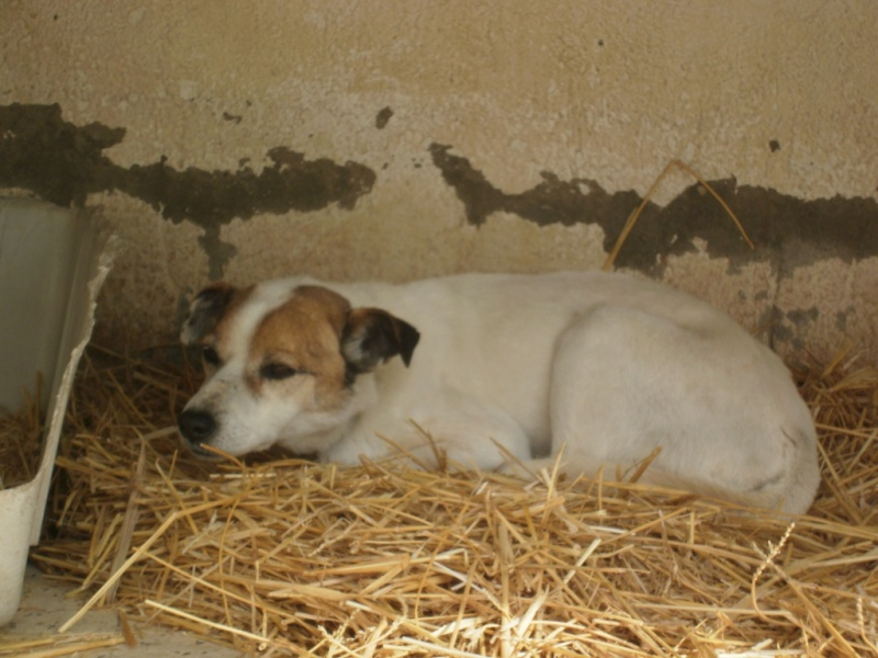 Sauvetage TEDE, vieux chien de la SPA Tunisie suite à la fermeture définitive Tede_110