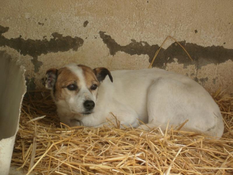 Sauvetage TEDE, vieux chien de la SPA Tunisie suite à la fermeture définitive Tede_210