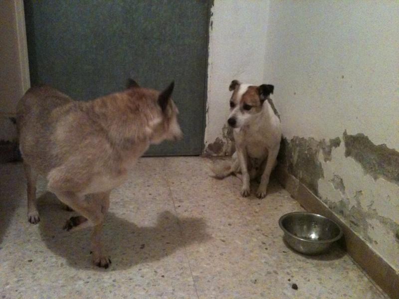 Sauvetage TEDE, vieux chien de la SPA Tunisie suite à la fermeture définitive Tede__10
