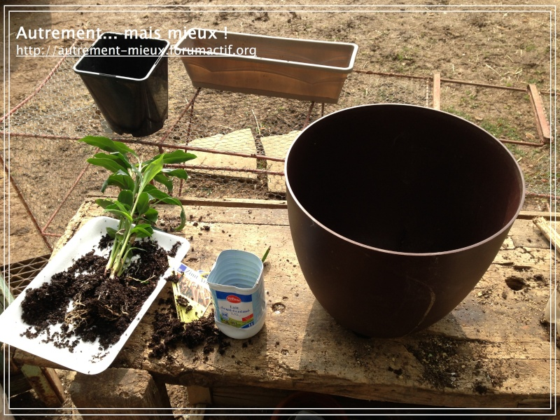 """Un pot """"à réserve d'eau"""" à partir de n'importe quel pot Img_0614"""