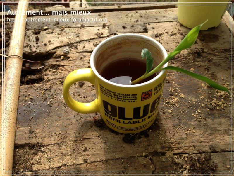 """Un pot """"à réserve d'eau"""" à partir de n'importe quel pot Img_0616"""