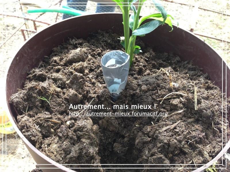 """Un pot """"à réserve d'eau"""" à partir de n'importe quel pot Img_0635"""