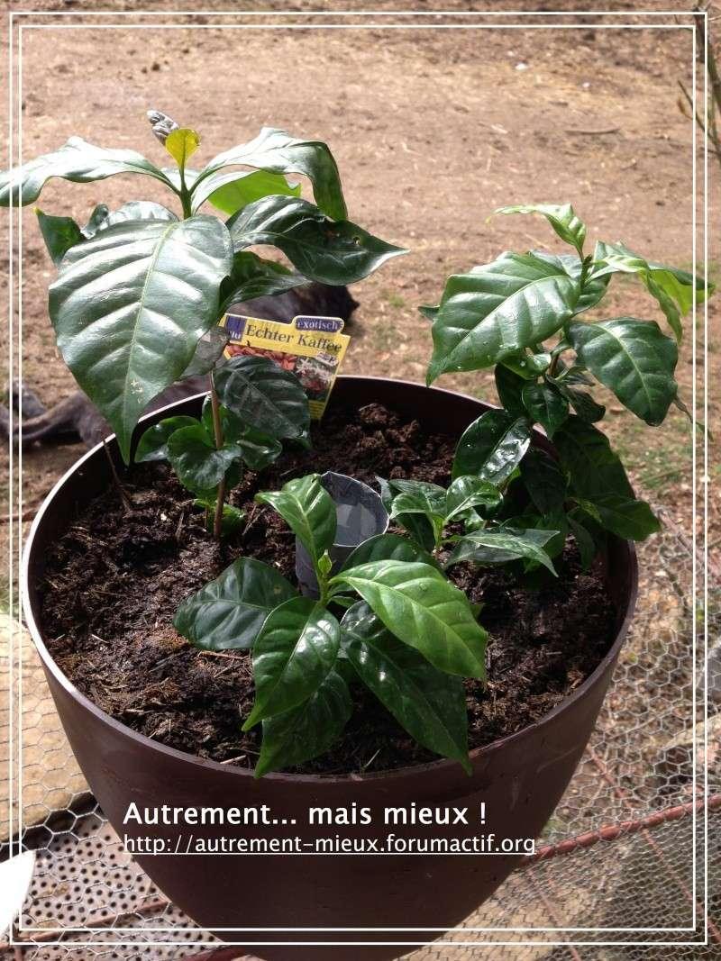 """Un pot """"à réserve d'eau"""" à partir de n'importe quel pot Img_0637"""