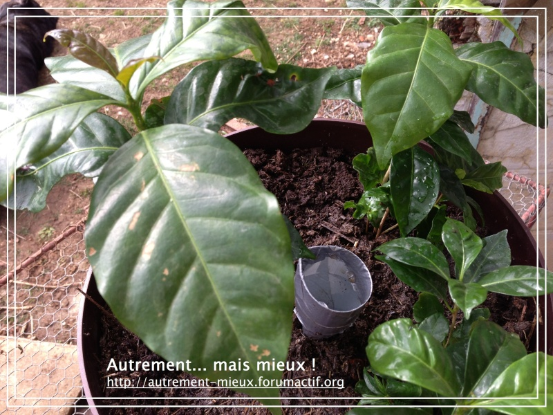 """Un pot """"à réserve d'eau"""" à partir de n'importe quel pot Img_0638"""