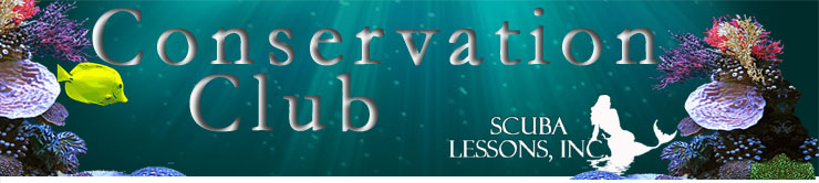 Central Florida Scuba Club Forum