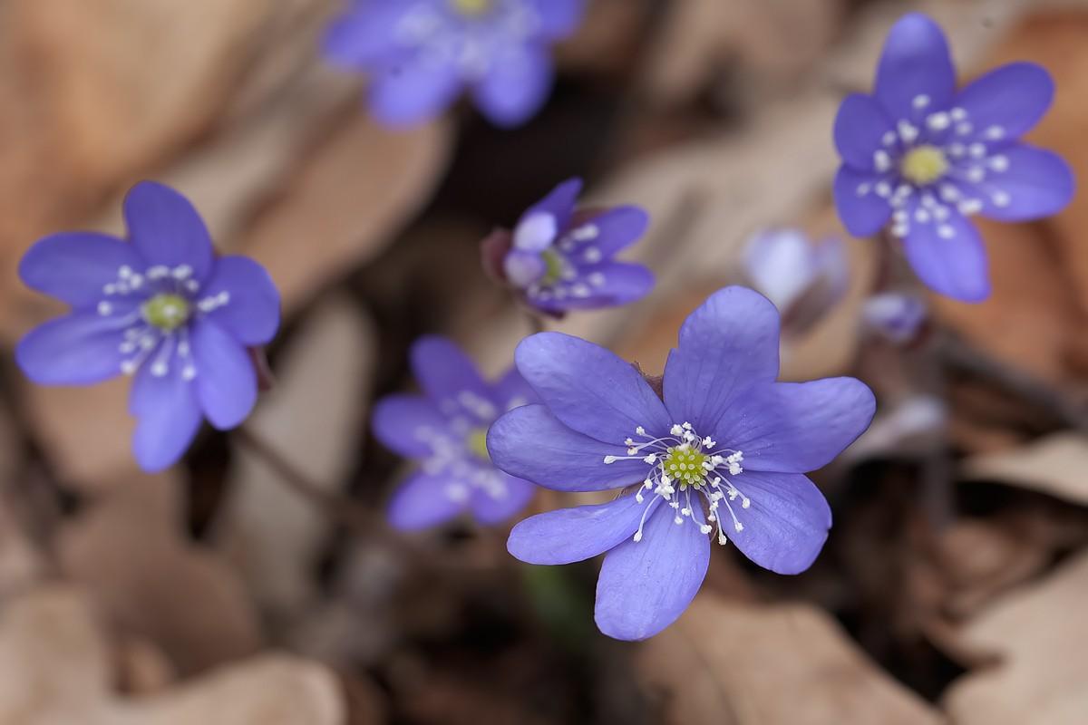 Primavera Img_2610