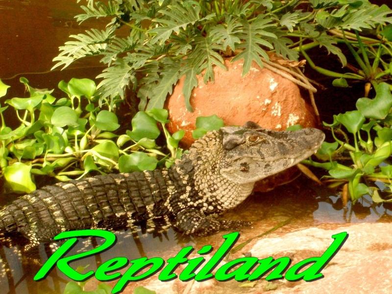 reptilesexotic
