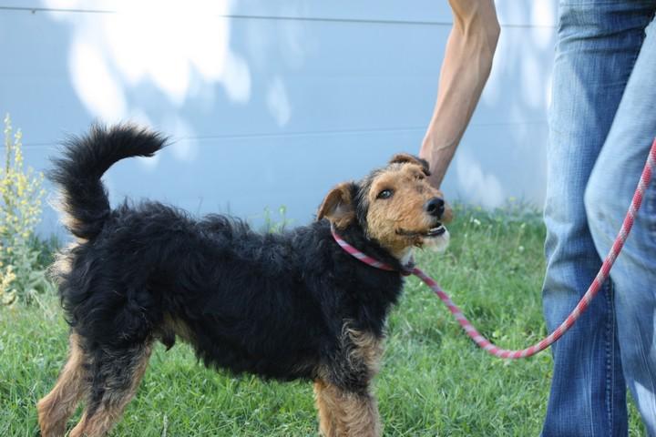 FOXY xJagd Terrier 250269802121955 Img_9424