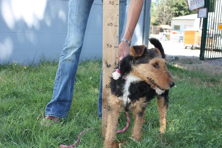 FOXY xJagd Terrier 250269802121955 Img_9427