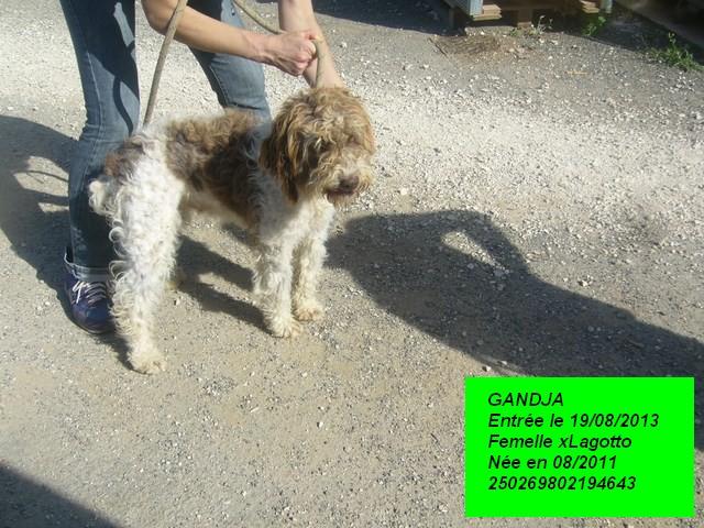 GANDJA xLagotto 250269802194643 en CA P1180110