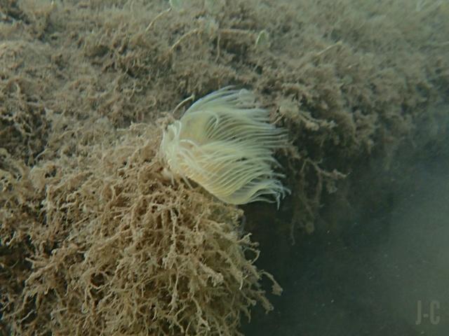 Ocean - Journée de l'océan, Opération mes rivages propres Img_2042