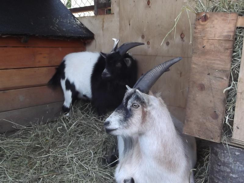Deux nouveaux amis Photo_11