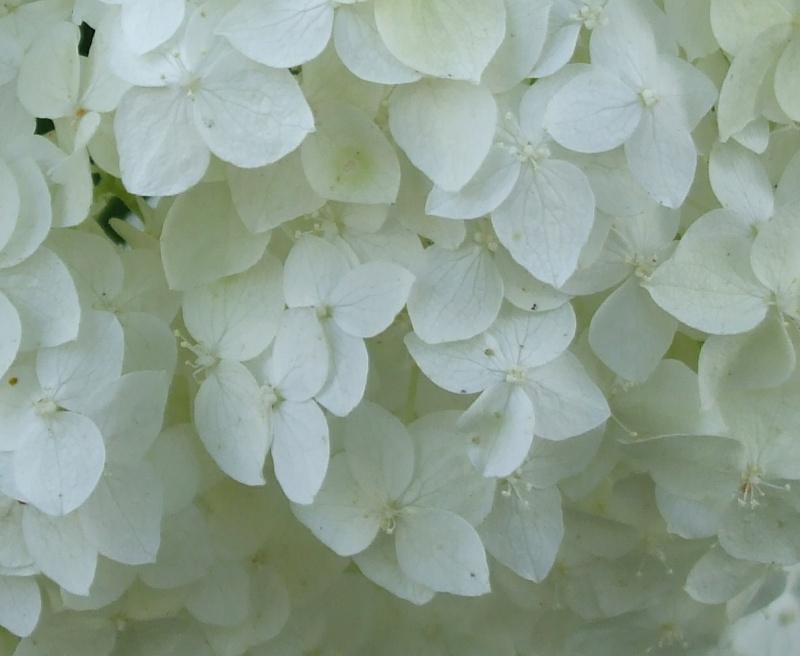 floraisons macro Dscf7310