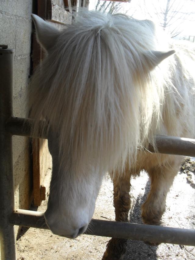 DIABOLO  - OI Poney - né en 1991 - adopté en novembre 2009 par Gaëlle Sam_0922