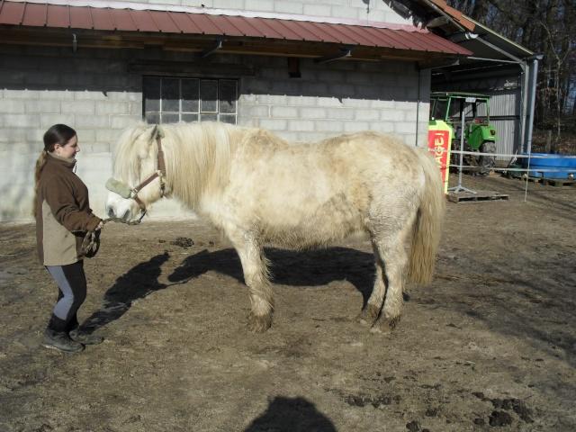 DIABOLO  - OI Poney - né en 1991 - adopté en novembre 2009 par Gaëlle Sam_0923