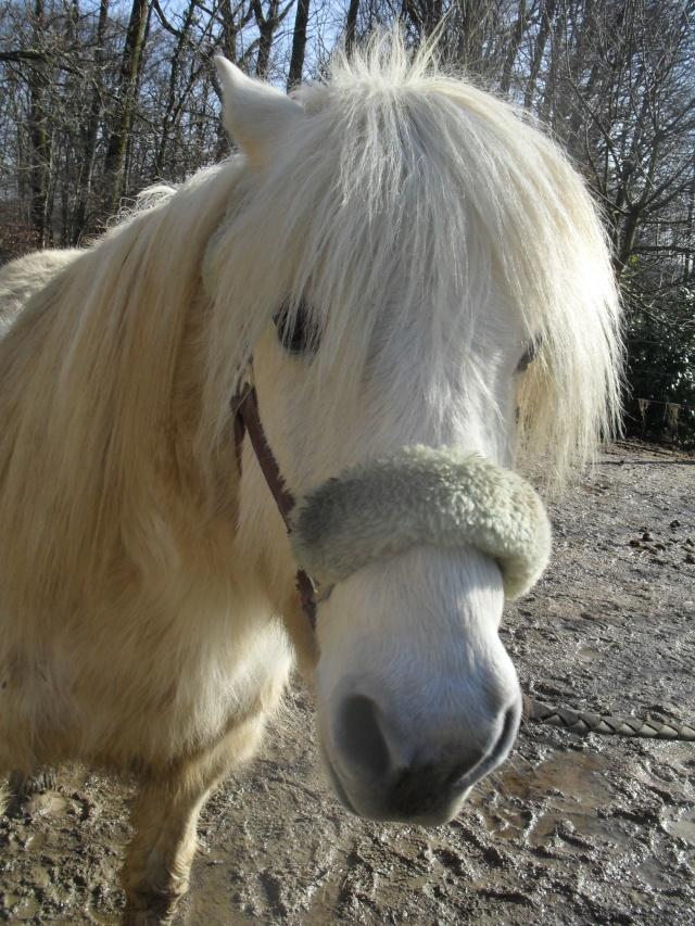 DIABOLO  - OI Poney - né en 1991 - adopté en novembre 2009 par Gaëlle Sam_0927