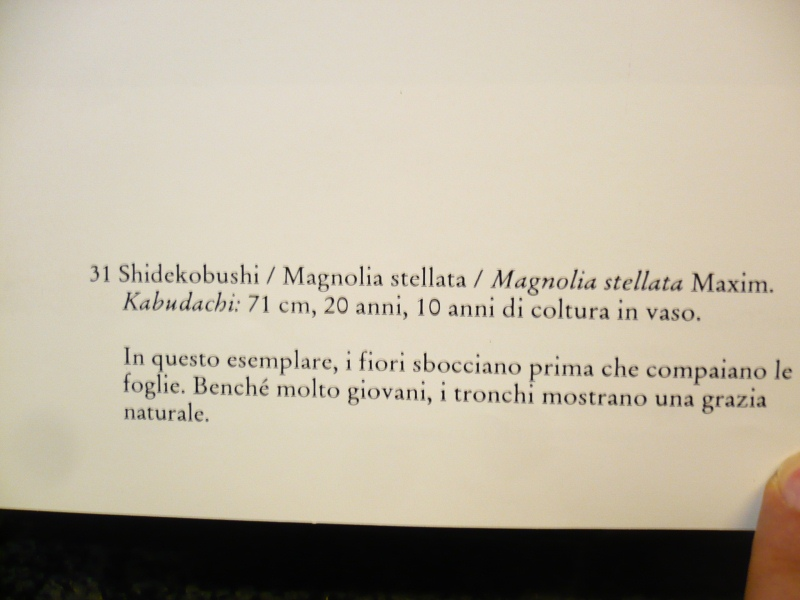 MAGNOLIA STELLATA A CEPPAIA. - Pagina 2 P1070710