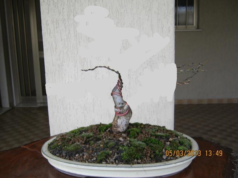 La mia piccola quercia antica. Piccol10