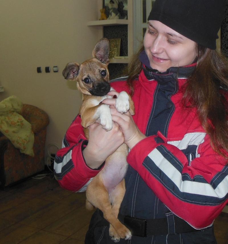 Betty, mini chien, soeur de Dixie Betty110