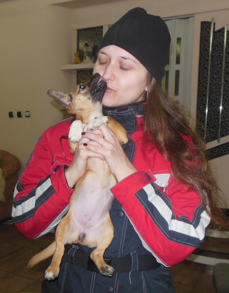 Betty, mini chien, soeur de Dixie Betty310