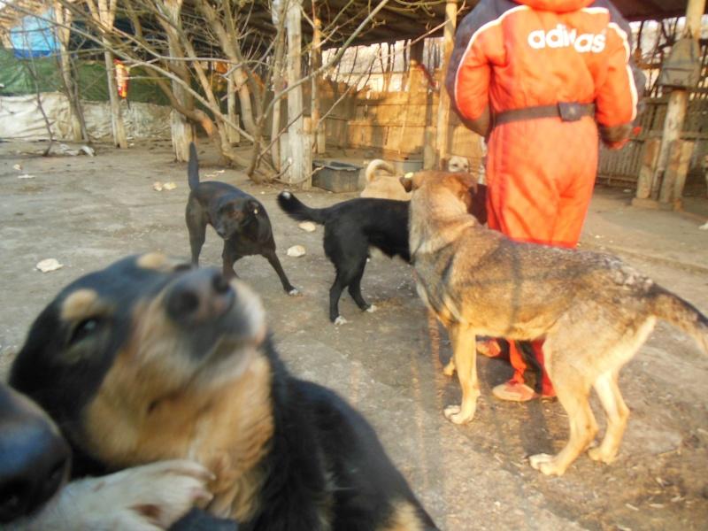 Negrutza, un amour de chienne, 2 ans environ - Page 2 Dscn2912