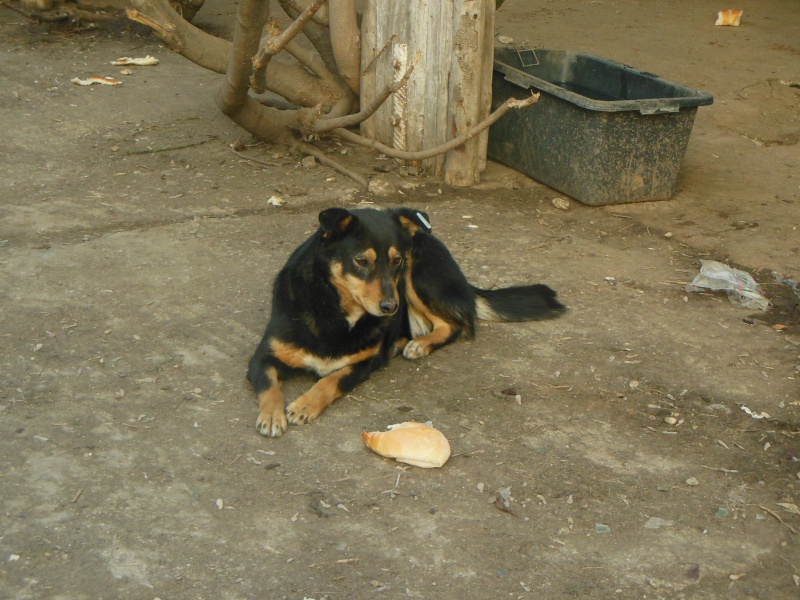 Negrutza, un amour de chienne, 2 ans environ - Page 2 Dscn2913