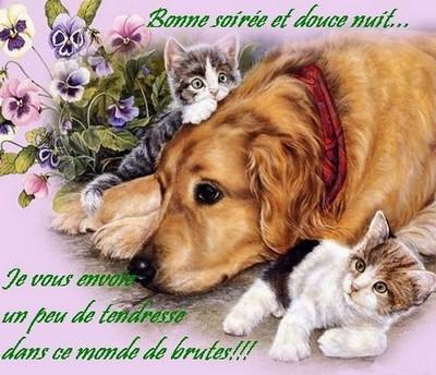 Bonjour bonsoir,...blabla Aout 2013 - Page 9 03319810