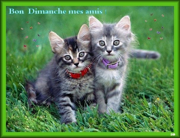 Bonjour bonsoir,...blabla Septembre 2013   - Page 2 Gif-bo10