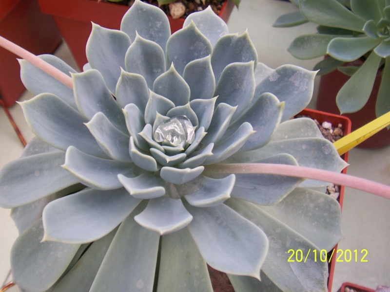 Cacti and Sukkulent in Köln, every day new flowers in the greenhouse Part 41 Bild1014