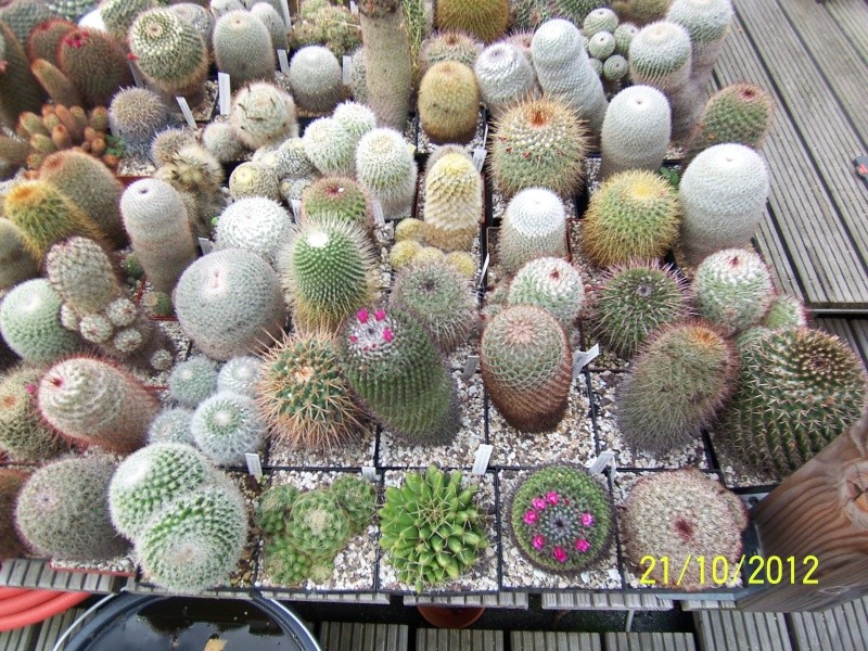 Cacti and Sukkulent in Köln, every day new flowers in the greenhouse Part 41 Bild1033