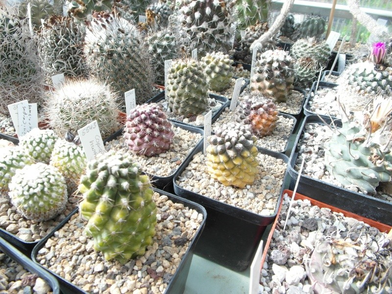 Cacti and Sukkulent in Köln, every day new flowers in the greenhouse Part 42 Bild1099