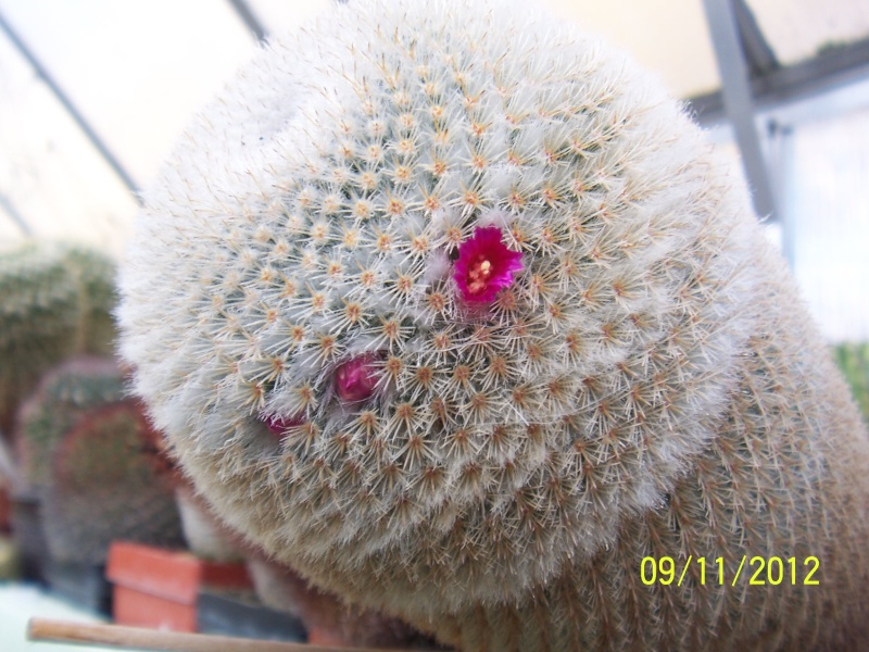 Cacti and Sukkulent in Köln, every day new flowers in the greenhouse Part 42 Bild1110