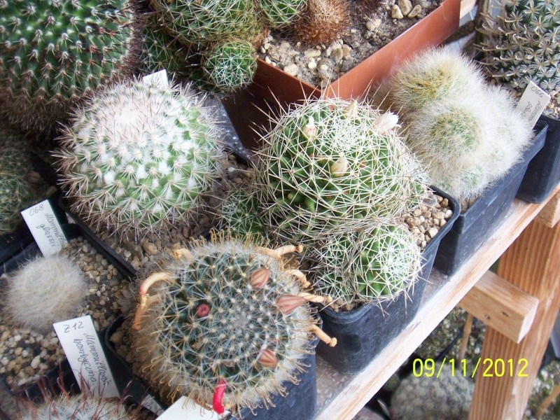 Cacti and Sukkulent in Köln, every day new flowers in the greenhouse Part 42 Bild1112