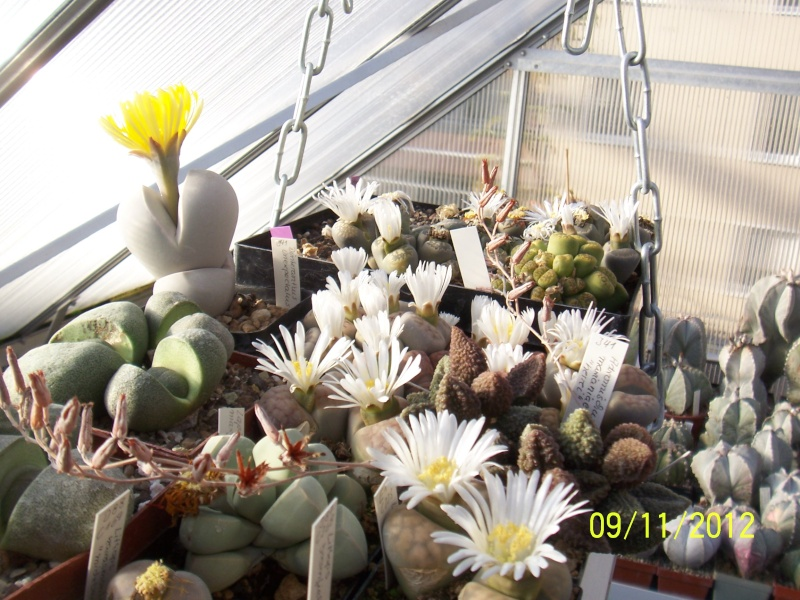 Cacti and Sukkulent in Köln, every day new flowers in the greenhouse Part 42 Bild1118