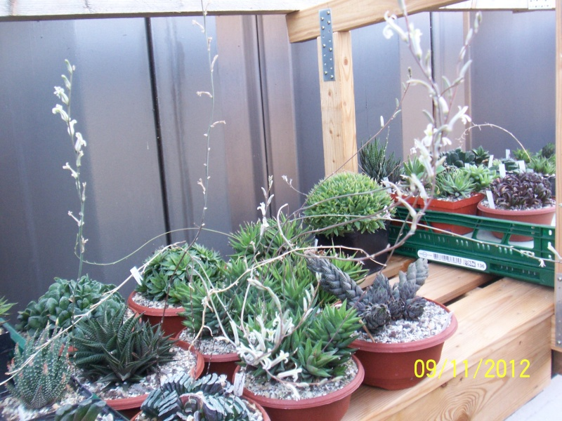 Cacti and Sukkulent in Köln, every day new flowers in the greenhouse Part 42 Bild1122