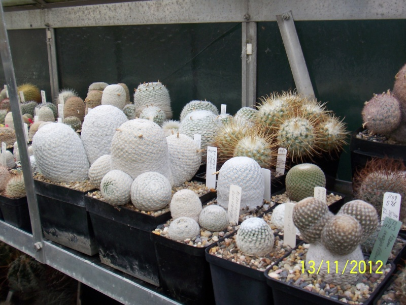 Cacti and Sukkulent in Köln, every day new flowers in the greenhouse Part 42 Bild1130