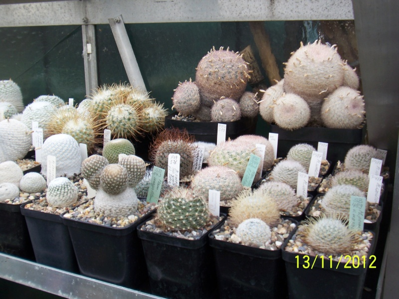 Cacti and Sukkulent in Köln, every day new flowers in the greenhouse Part 42 Bild1131