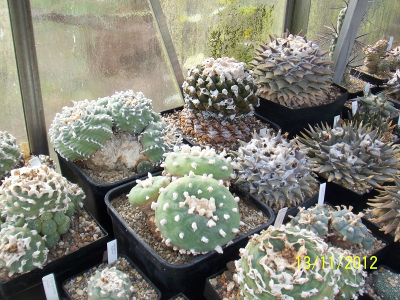 Cacti and Sukkulent in Köln, every day new flowers in the greenhouse Part 42 Bild1132