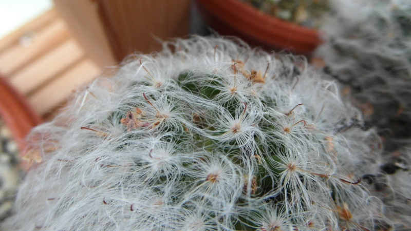 Cacti and Sukkulent in Köln, every day new flowers in the greenhouse Part 36 Bild_012