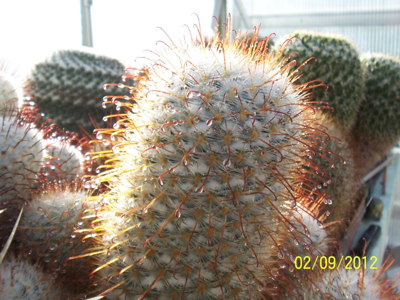 Cacti and Sukkulent in Köln, every day new flowers in the greenhouse Part 32 Bild_114