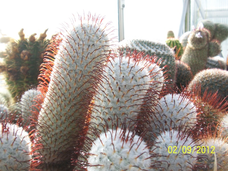 Cacti and Sukkulent in Köln, every day new flowers in the greenhouse Part 32 Bild_115