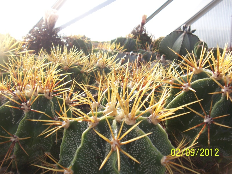 Cacti and Sukkulent in Köln, every day new flowers in the greenhouse Part 32 Bild_118