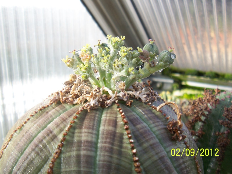 Cacti and Sukkulent in Köln, every day new flowers in the greenhouse Part 32 Bild_122