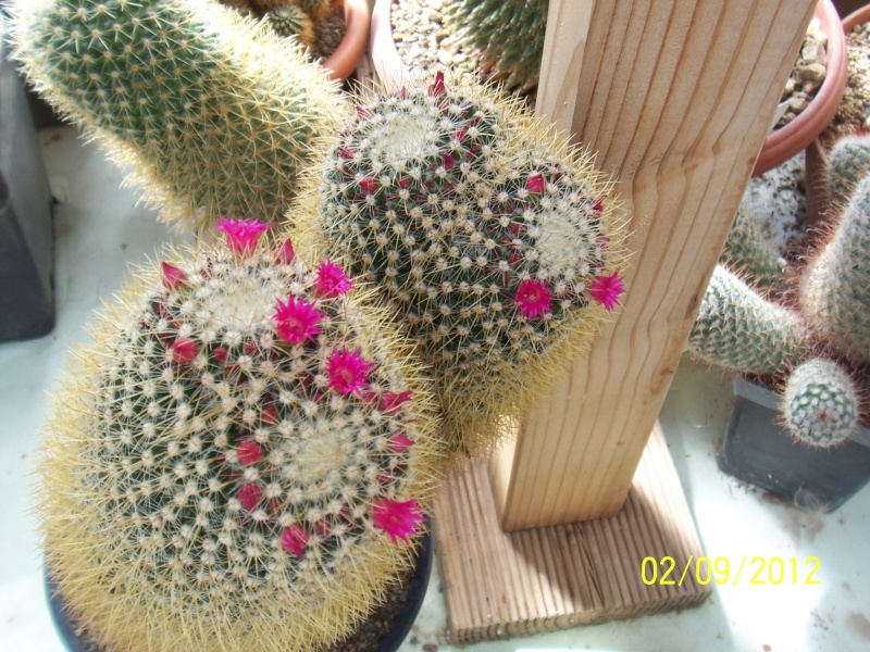 Cacti and Sukkulent in Köln, every day new flowers in the greenhouse Part 32 Bild_152