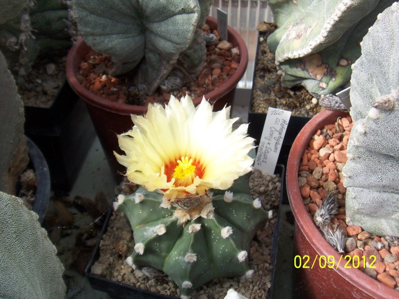Cacti and Sukkulent in Köln, every day new flowers in the greenhouse Part 33 Bild_171