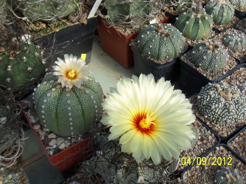Cacti and Sukkulent in Köln, every day new flowers in the greenhouse Part 33 Bild_223