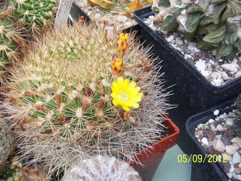 Cacti and Sukkulent in Köln, every day new flowers in the greenhouse Part 33 Bild_251