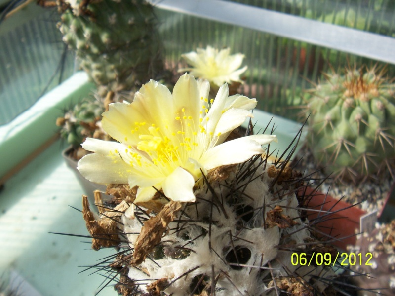 Cacti and Sukkulent in Köln, every day new flowers in the greenhouse Part 33 Bild_261