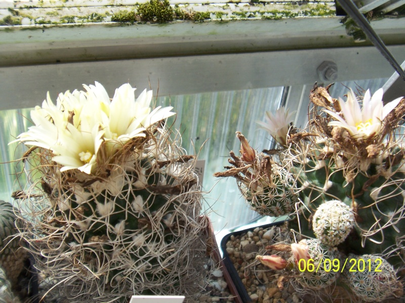 Cacti and Sukkulent in Köln, every day new flowers in the greenhouse Part 33 Bild_266
